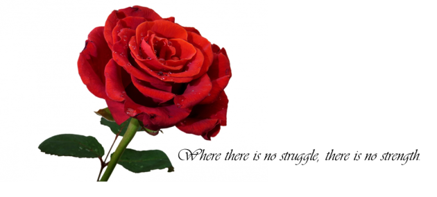 Rose Sylvia Quote